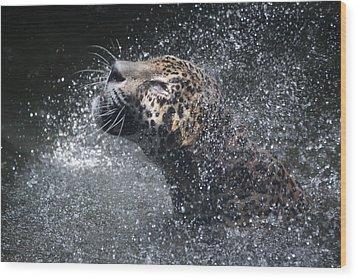 Wet Jaguar  Wood Print