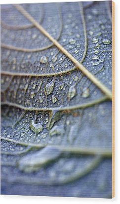 Wet Leaf Wood Print by Frank Tschakert