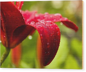 Wet Lily Wood Print