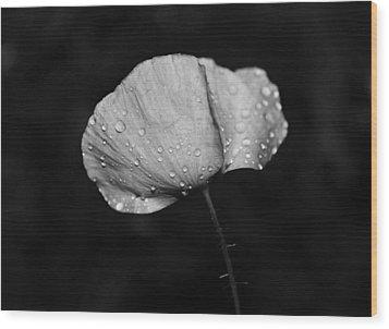 Wet Poppy  Wood Print