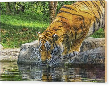 Wood Print featuring the photograph Wet Whiskers by Glenn Feron