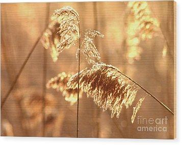 Wetland Sunrise Wood Print