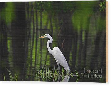 Wetland Wader Wood Print by Al Powell Photography USA