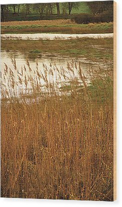 Wood Print featuring the digital art Wetlands by David Davies