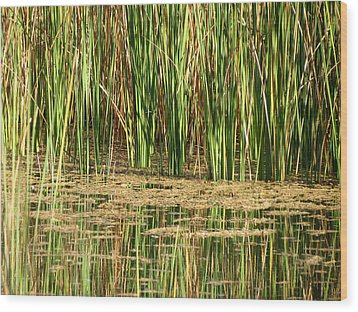 Wood Print featuring the photograph Wetlands by Laurel Powell