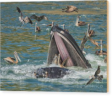 Whale Almost Eating A Pelican Wood Print by Alice Cahill