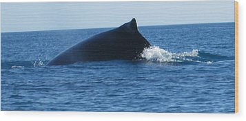 Wood Print featuring the photograph Whale by Tony Mathews