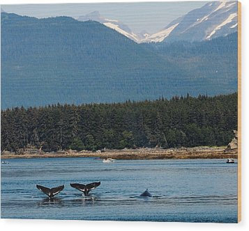 Whales In Alaska Wood Print