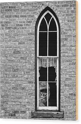 What 800 Lbs Gorilla Bw Wood Print by Steve Harrington