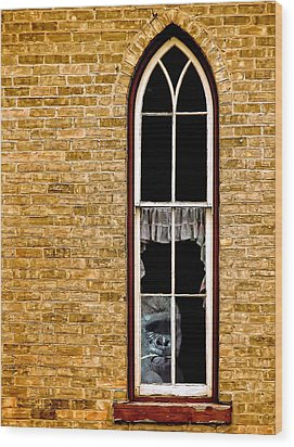 What 800 Lbs Gorilla Wood Print by Steve Harrington