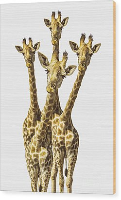 What Are You Looking At? Wood Print by Diane Diederich