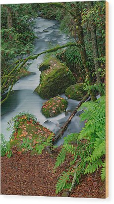 Wood Print featuring the photograph Whatcom Falls 1 by Jacqui Boonstra