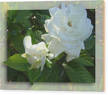 Whats So Special About White Flowers Wood Print by Ginny Schmidt