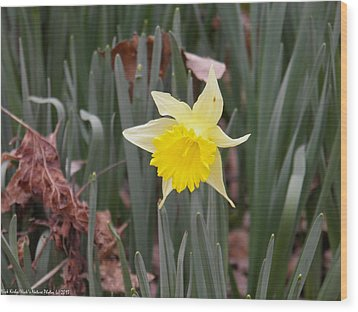 Wood Print featuring the photograph Whats Up Buttercup by Nick Kirby