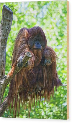 What's Up Wood Print by Heiko Koehrer-Wagner