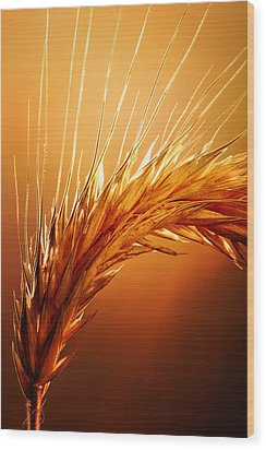 Wheat Close-up Wood Print by Johan Swanepoel