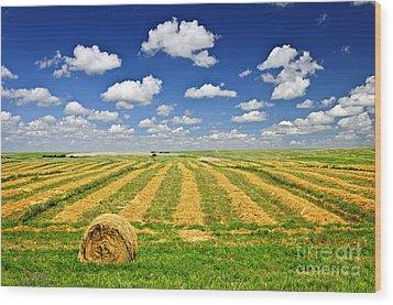 Wheat Farm Field And Hay Bales At Harvest In Saskatchewan Wood Print by Elena Elisseeva