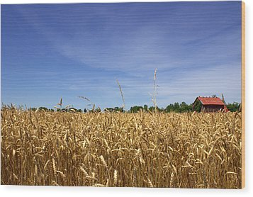 Wheat Field II Wood Print by Beth Vincent
