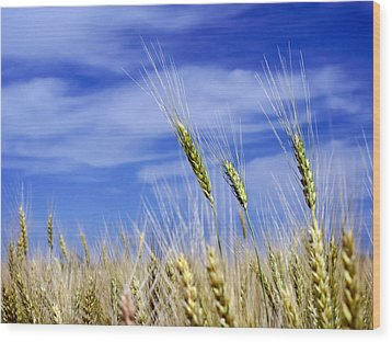 Wood Print featuring the photograph Wheat Trio by Keith Armstrong