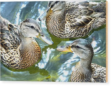 When Duck Bills Meet Wood Print by Lesa Fine