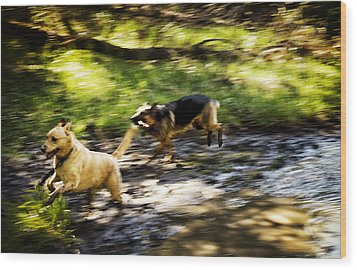When Life Gives You A Mud Puddle . . . Wood Print by Belinda Greb