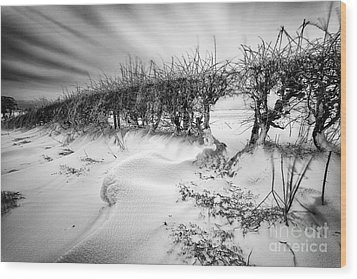 When The Wind Blows Wood Print by John Farnan