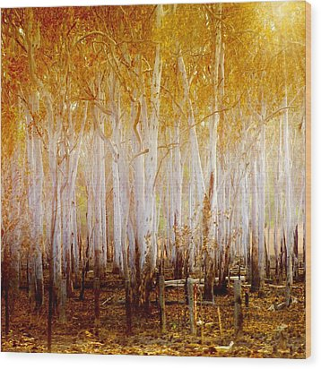 Where The Sun Shines Wood Print by Holly Kempe