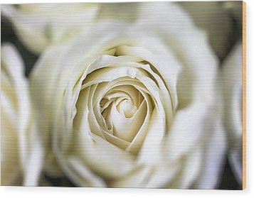 Whie Rose Softly Wood Print by Garry Gay