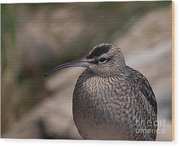 Wood Print featuring the photograph Whimbrel by Bianca Nadeau