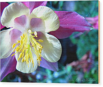 Wood Print featuring the photograph Whimsical Columbine by Brooks Garten Hauschild