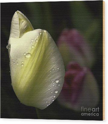 Whispering Tulips Wood Print by Jean OKeeffe Macro Abundance Art