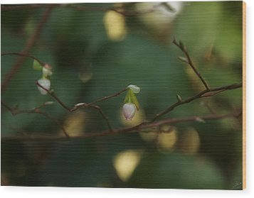 Wood Print featuring the photograph Whispers Of Spring In The Tranquil Forest by Lisa Knechtel