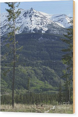 Whistler - Jasper - Canada Wood Print by Phil Banks