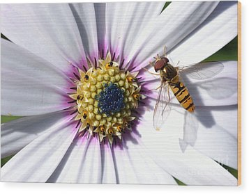 Wood Print featuring the photograph White African Daisy Marmalade Fly by Scott Lyons