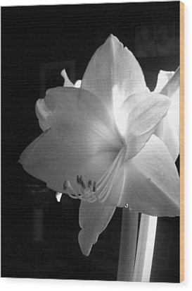 White Amaryllis  Wood Print