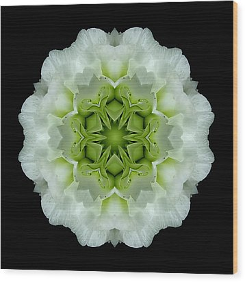 White And Green Begonia Flower Mandala Wood Print by David J Bookbinder
