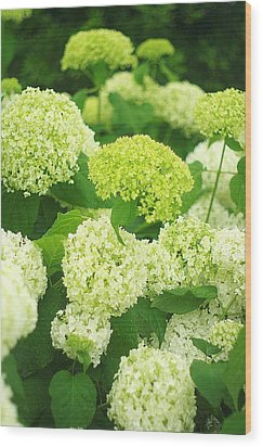 Wood Print featuring the photograph White And Green Hydrangea Flowers by Suzanne Powers