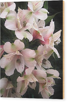 Wood Print featuring the photograph White And Pink Peruvian Lilies by Diane Alexander