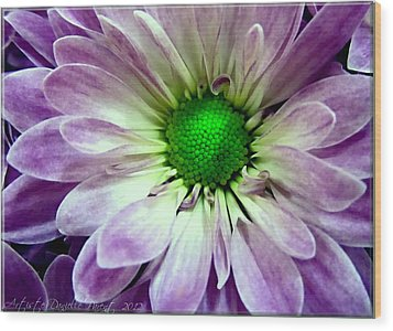 White And Purple Daisy Wood Print by Danielle  Parent