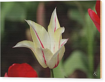 White And Red Flower Wood Print