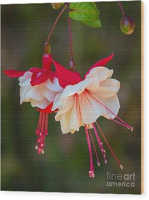 White And Red Fuchsia Wood Print