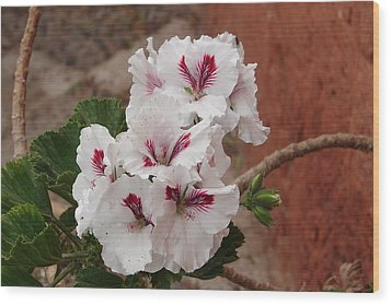 Wood Print featuring the photograph White And Red Geraniums by Lew Davis
