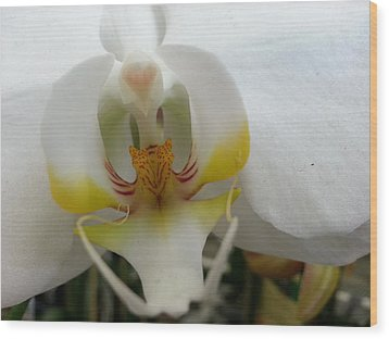 White And Yellow Orchid Wood Print
