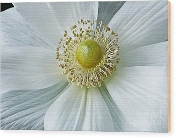 Wood Print featuring the photograph White Anemone 2012 by Art Barker
