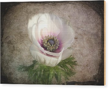 Wood Print featuring the photograph White Anemone by Barbara Orenya
