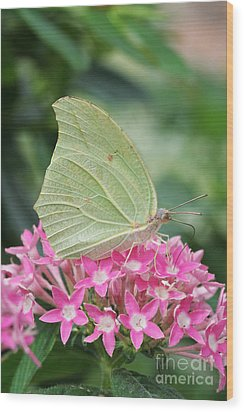 Wood Print featuring the photograph White Angled Sulphur by Judy Whitton
