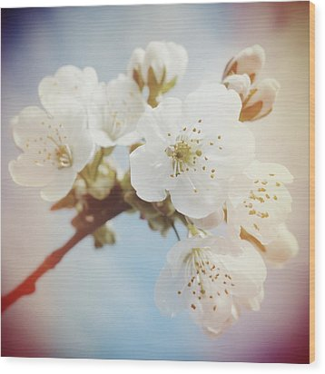 White Apple Blossom In Spring Wood Print