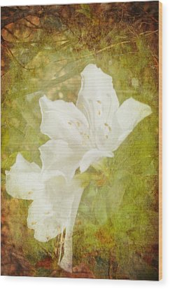 White Azalea Wood Print by Judy Hall-Folde