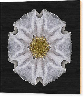 White Beach Rose I Flower Mandala Wood Print
