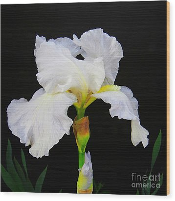 White Bearded Iris Wood Print